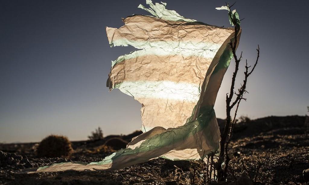 Eduardo Leal: Plastic Trees