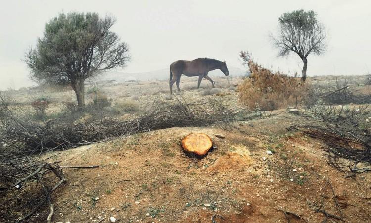 Petros Koublis: In Landscapes