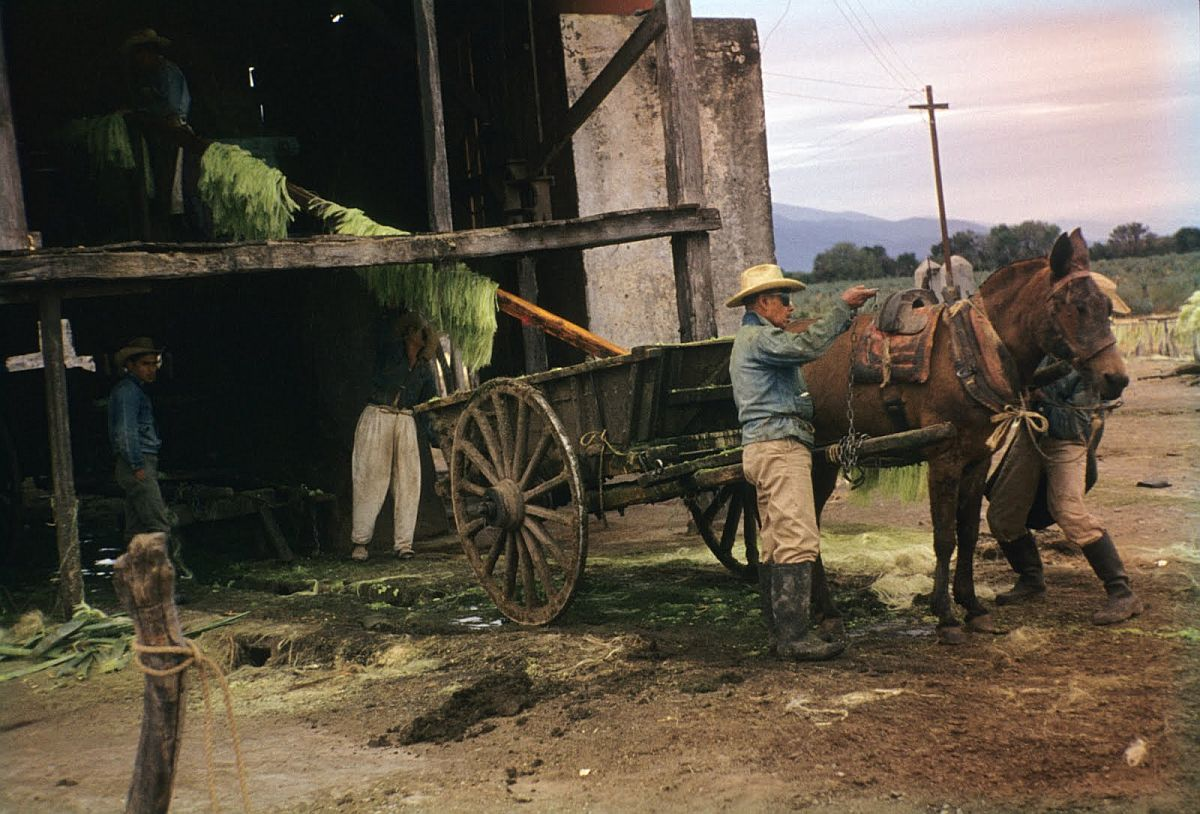 everyday-life-in-mexico-city-in-the-1950s-09