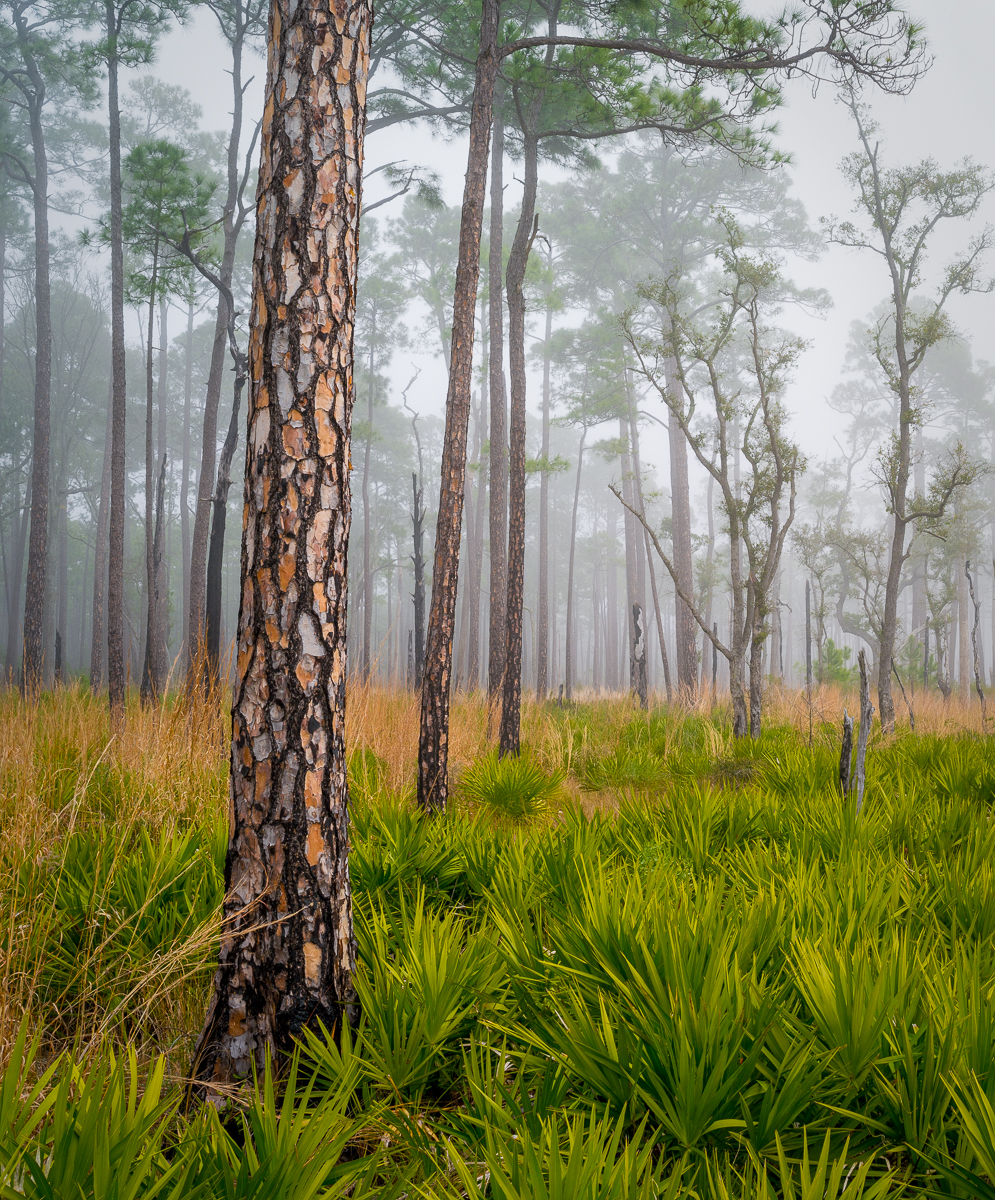 Bay Flats Recreation Area, Eglin Reservation, Florida