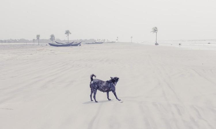 Farhad Rahman: Song of a Coast