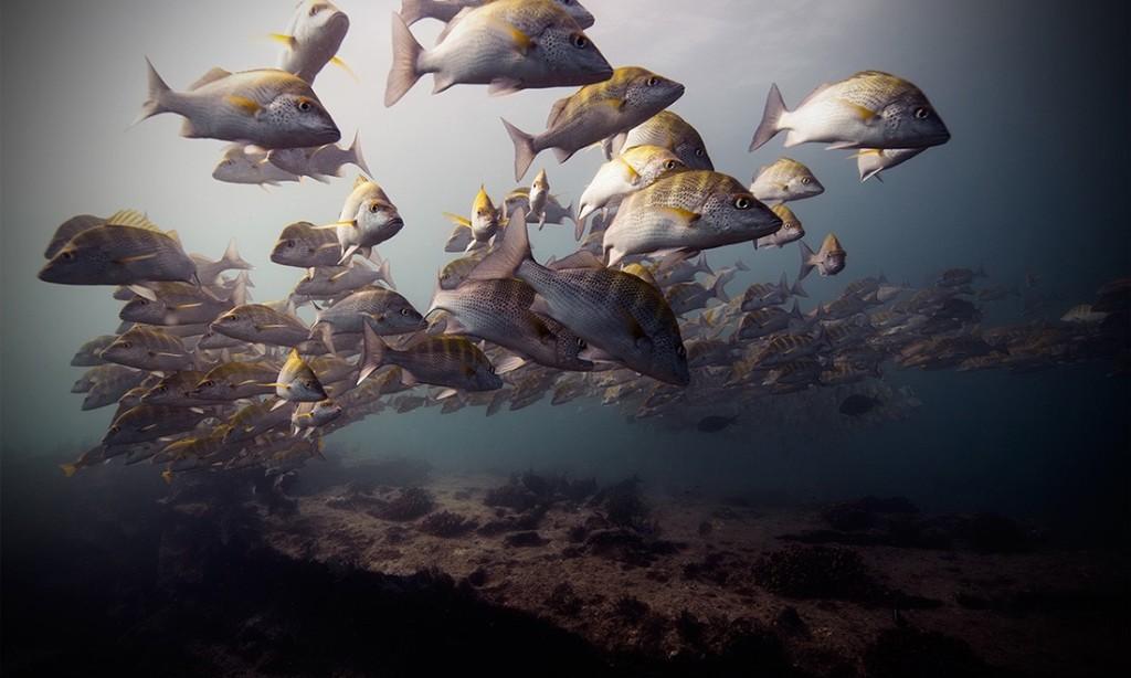 Jorge Cervera Hauser: Underwater Photography
