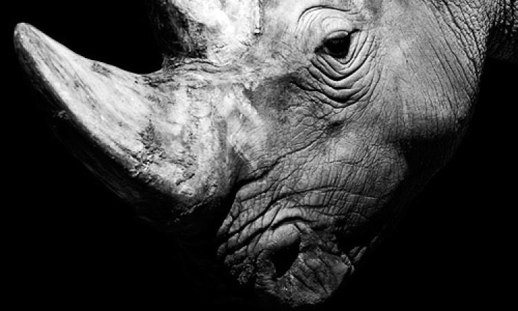Nicolas Evariste: Dark Zoo – Animal Portraits