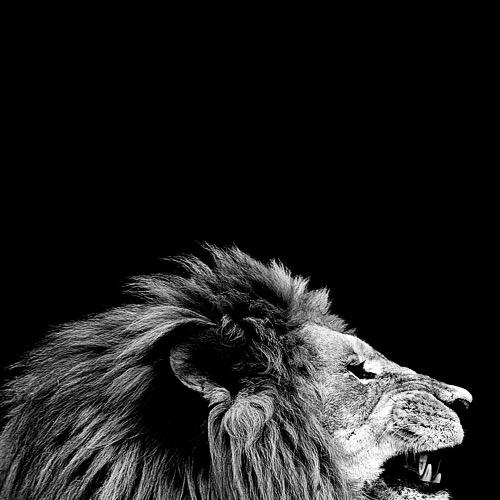 Dark Zoo © Nicolas Evariste