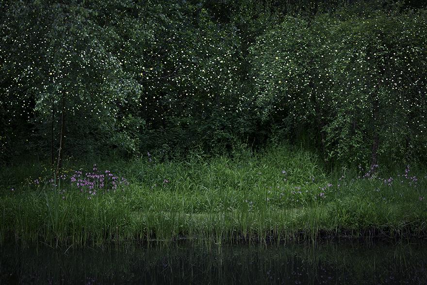 Stars © Ellie Davies