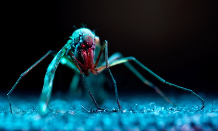 Ivaylo Petrov: Macro Pictures of Insects