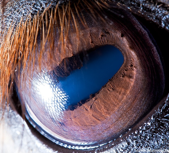 Horse © Suren Manvelyan