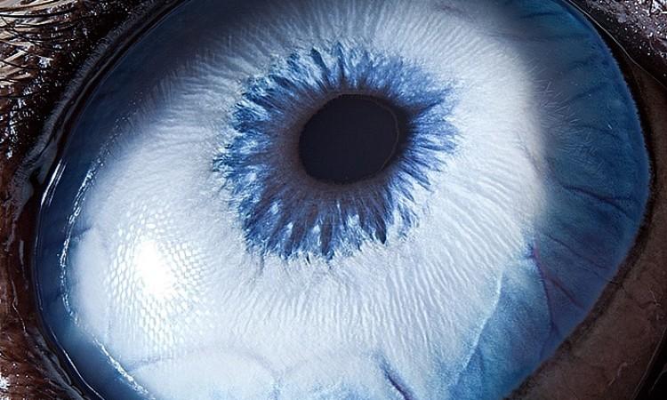 Suren Manvelyan: Animal Eyes Study