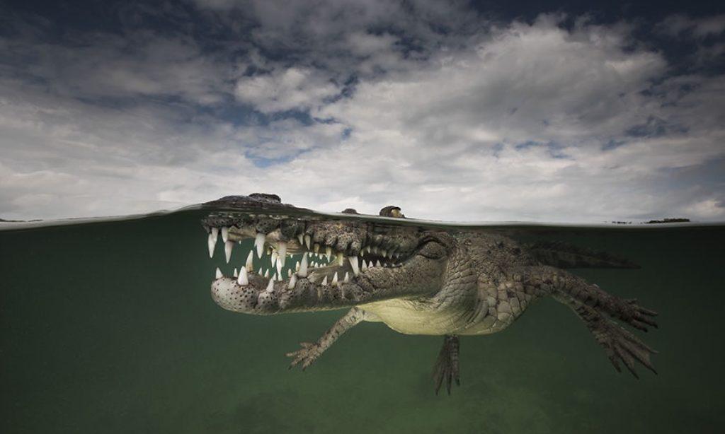 Matthew Smith: Half-Underwater Photos Showing the World Beneath