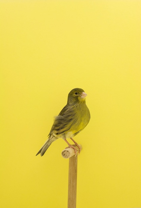 Show Birds © Luke Stephenson