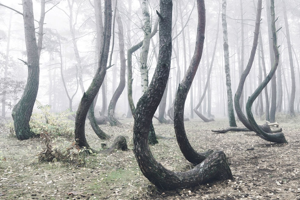 The Crooked Forest © Kilian Schönberger