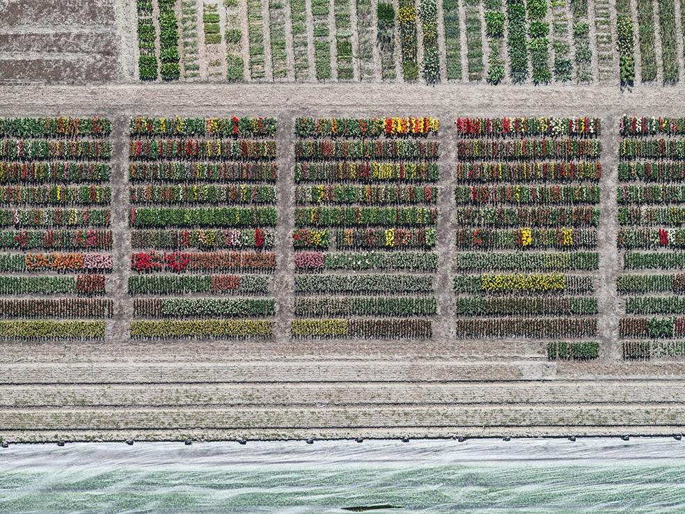 Tulip Fields © Bernhard Lang