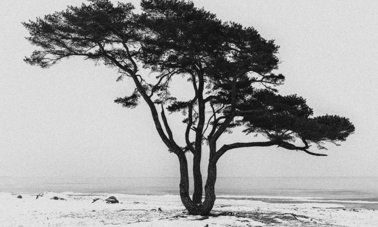 Roger Hansson: Winterscapes in Black And White