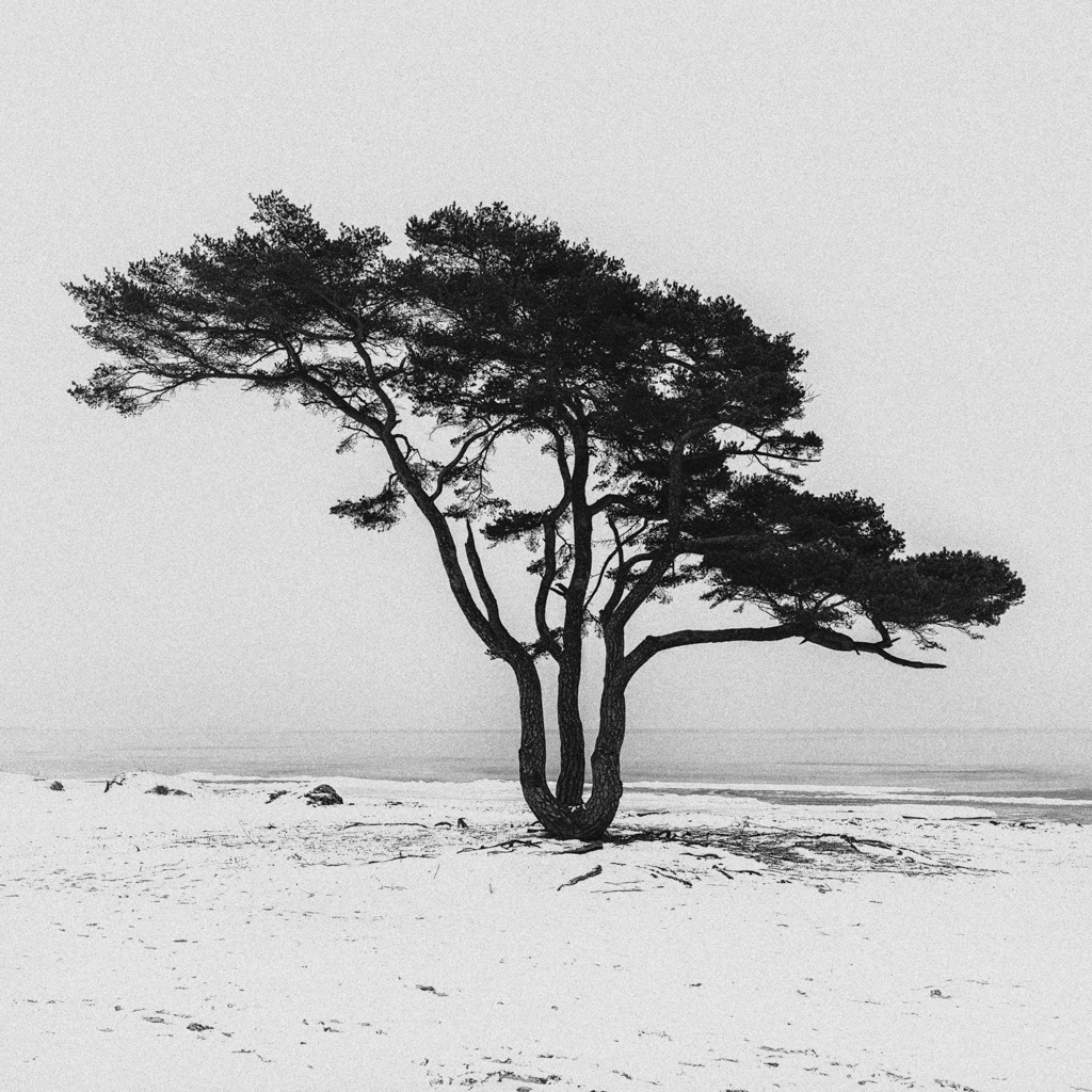 © Roger Hansson