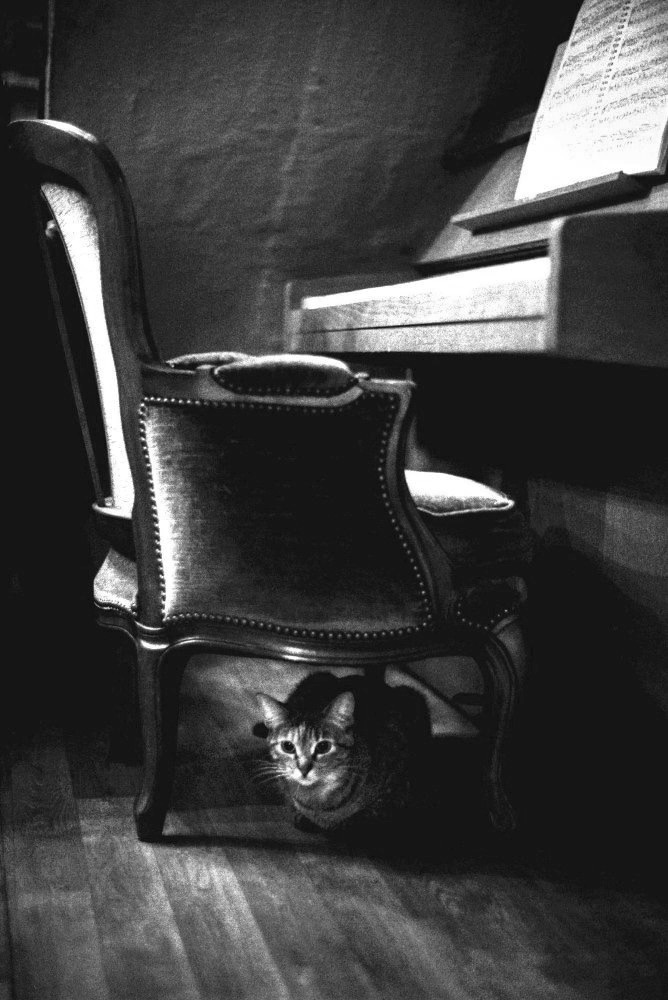 Hiroo_Fujitani-The_Lyric_Poetry_to_a_Cat-Photogrvphy_Magazine_05