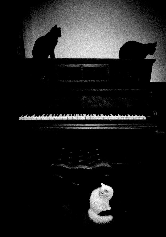 Hiroo_Fujitani-The_Lyric_Poetry_to_a_Cat-Photogrvphy_Magazine_07