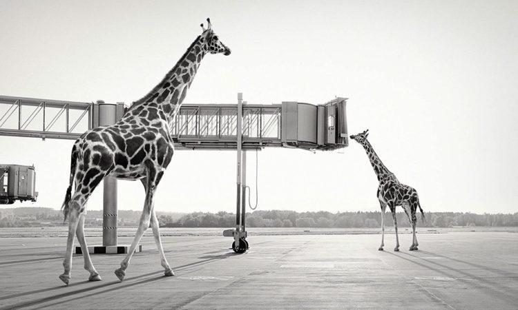 Tom Nagy: Lost Animals
