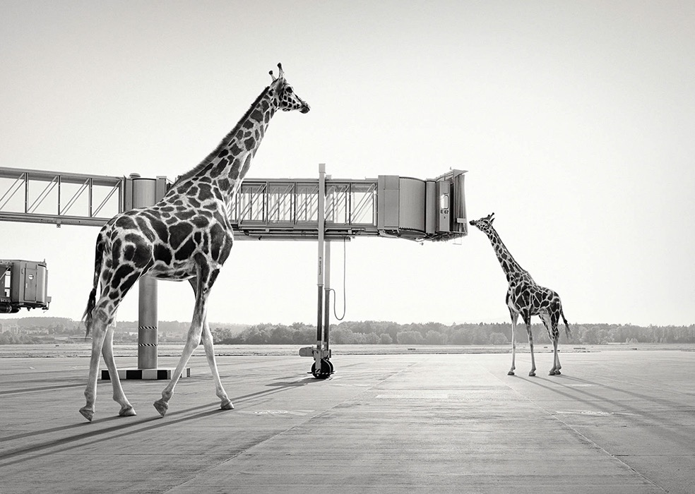 Lost Animals © Tom Nagy