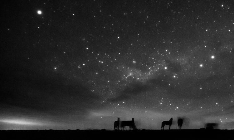 Eliseo Miciu: Patagonia's Last Wild Horses