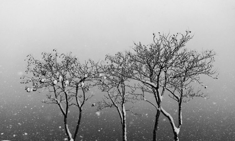 Namdon Kim: Snowscapes