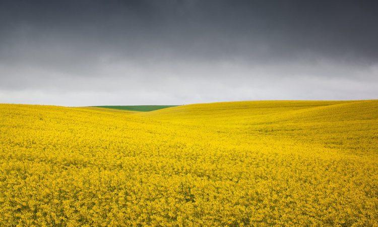 Bernd Walz: Fields