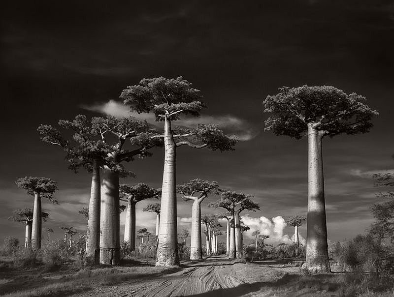 Ancient Trees © Beth Moon