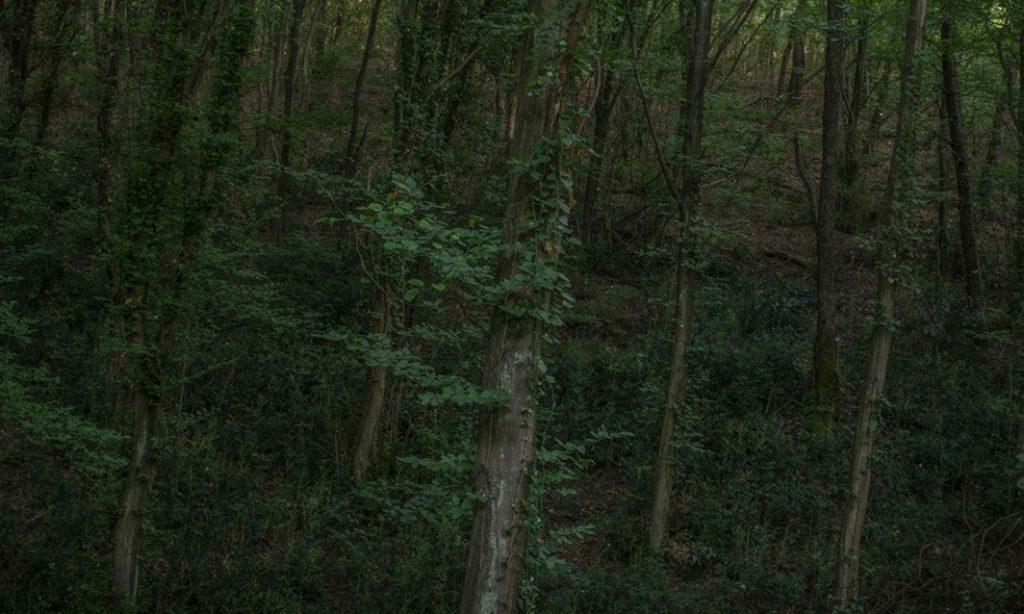 Tamina-Florentine Zuch: Gür Orman – A Thick Forest