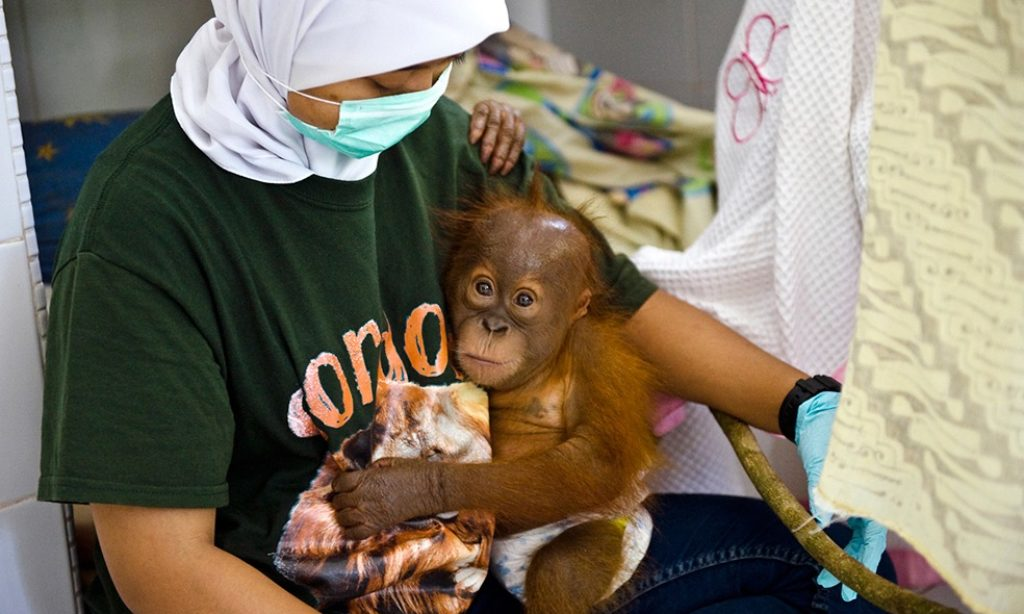 Sandra Hoyn: Displaced by Palmoil – Indonesia's Last Orangutans