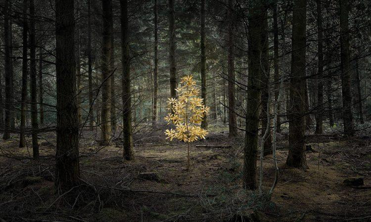 Ellie Davies: Half Light – Exhibition