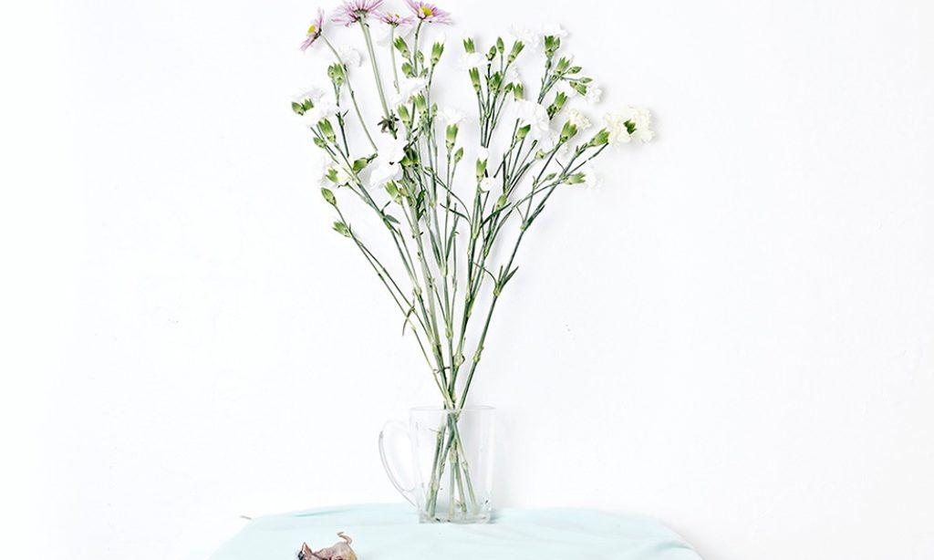 Jennifer Georgescu: White Series
