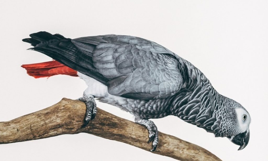Oliver Regueiro – Earthbound | Portrait Series of Captive Birds