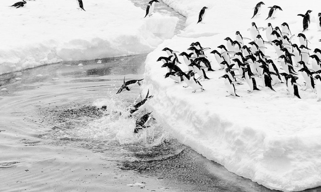 Guillaume Pepy: Terra Incognita
