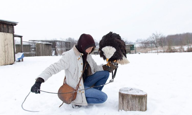 Lenka Grabicova: Falconers