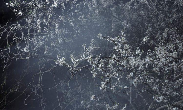 Rene Koster: Blossom