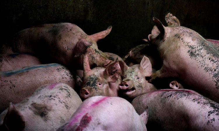 Aitor Garmendia: Slaughterhouse