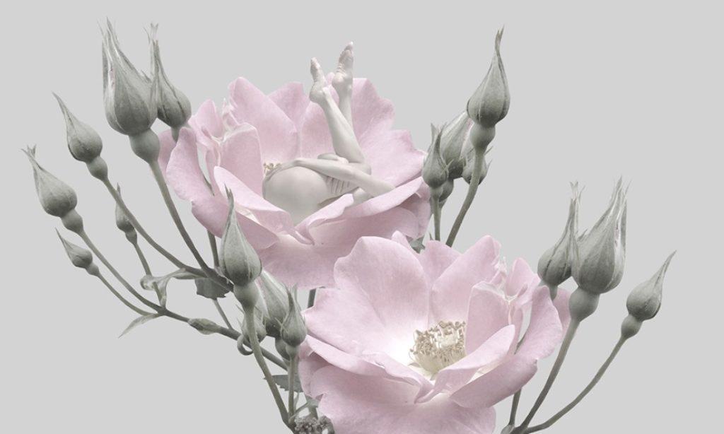Sui Sawada: Self-Flowering