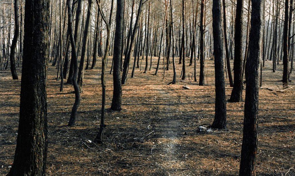 Arnaud Teicher: Wildfire