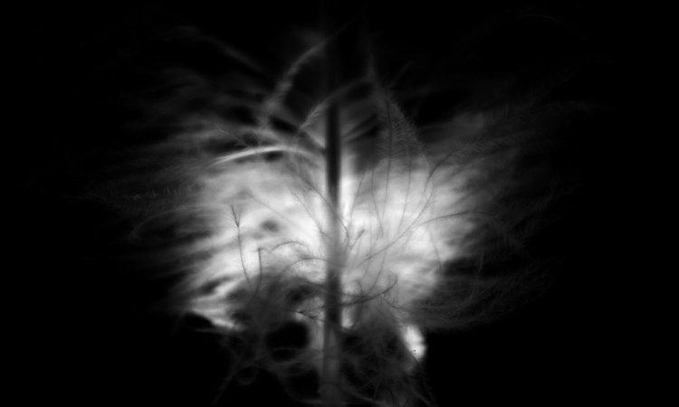 Florian Langellier: Abyss