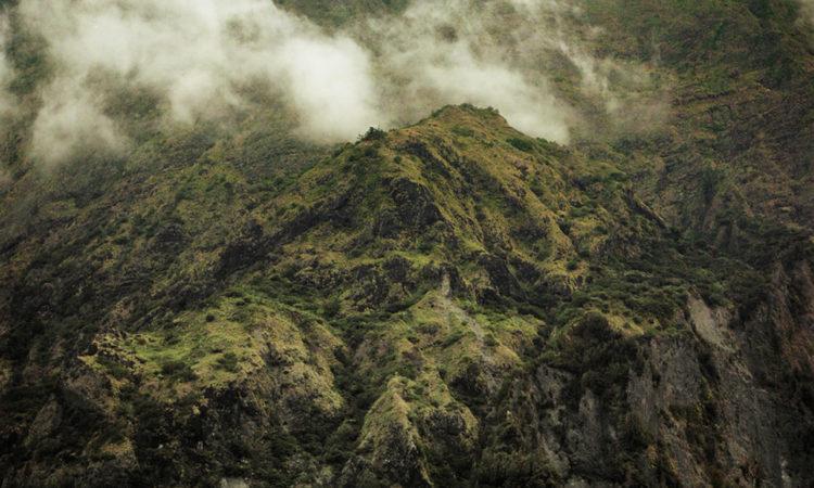 Julien Coquentin: Tropics
