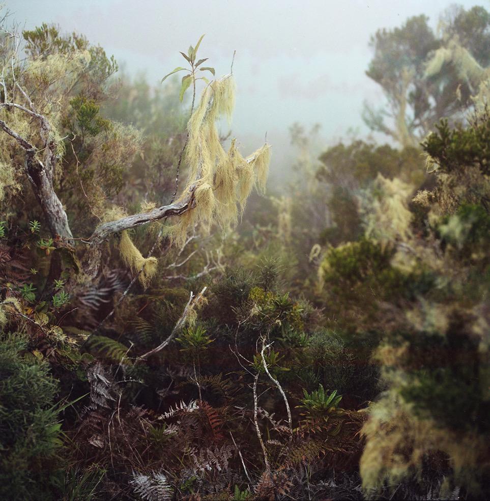 Tropics © Julien Coquentin