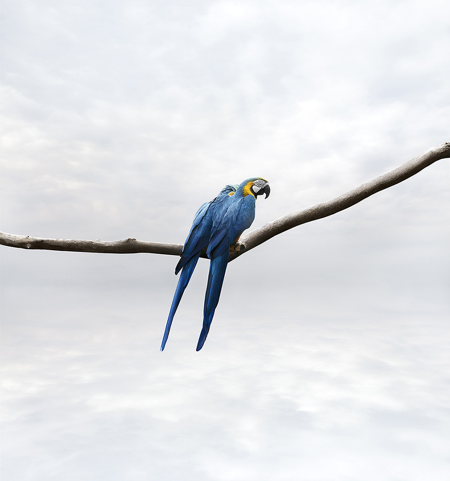 Meditations © Alice Zilberberg